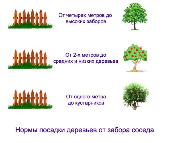 Нормы посадки деревьев от забора