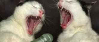 Коты орут в микрофон