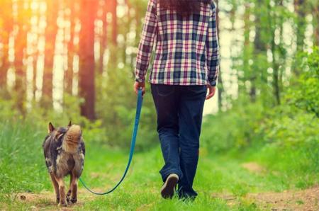Девушка прогуливается с собакой по лесу